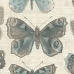 1443_Q_butterflies