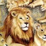 1535_1_Lions