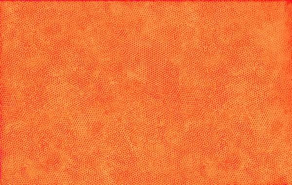 2/1867O1 Carrot