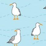 2083_B_seagulls