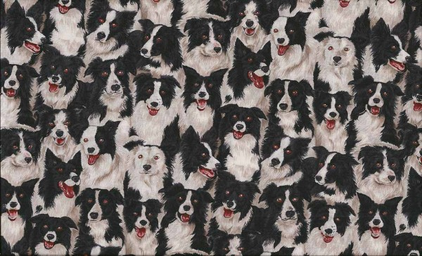 776/1 Border Collie