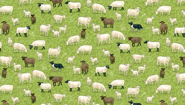 2291/1 Sheep