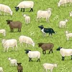 2291_1_Sheep