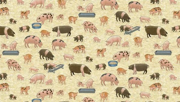 2292/1 Pigs