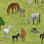 2295_1_Horses