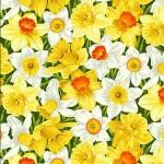 2324_1_Daffodil