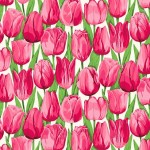 2329_P_Tulip