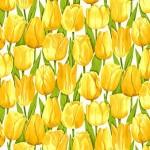 2329_Y_Tulip