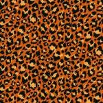 2403_N_leopard
